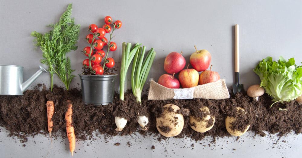 Lợi ích của cách trồng rau trên sân thượng