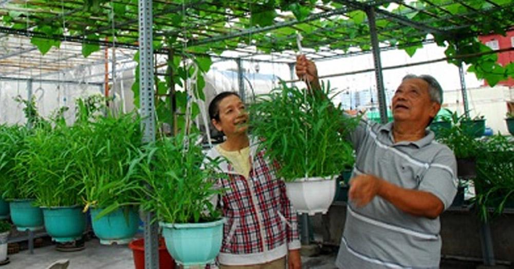 Các bước thiết kế vườn rau trên sân thượng đơn giản, hiệu quả