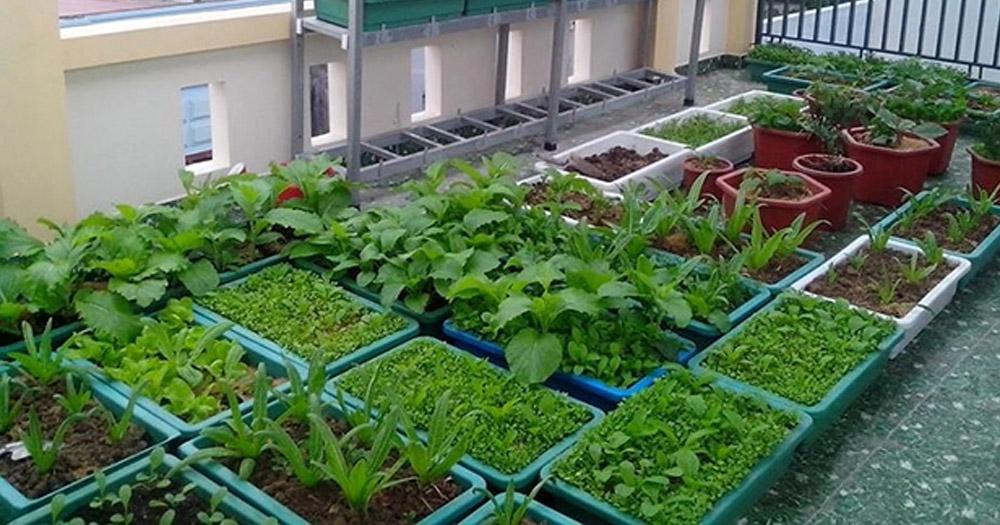 Cách chăm sóc vườn rau đúng cách