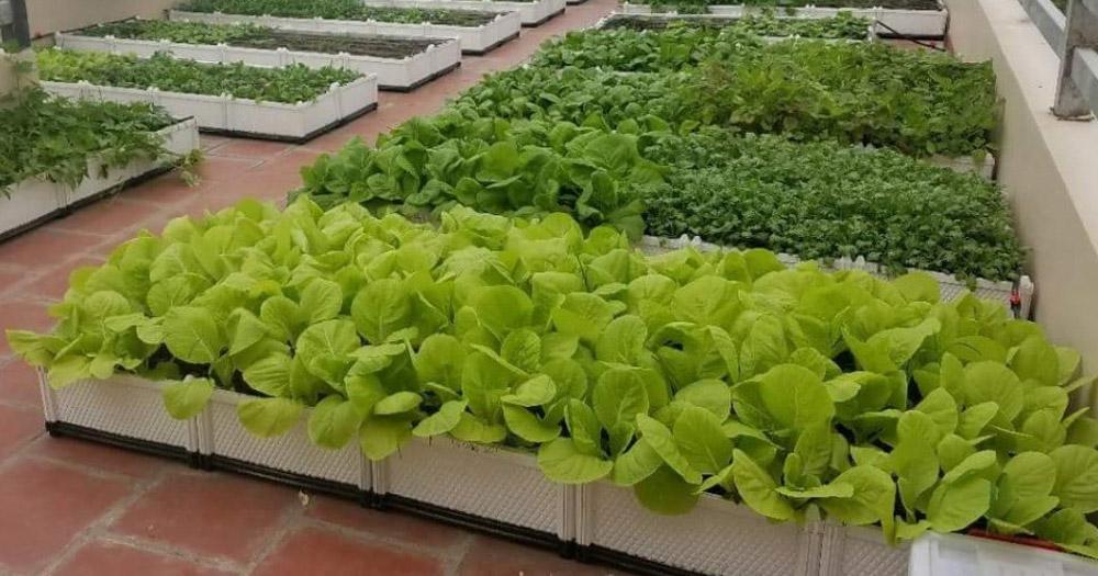 Các lưu ý khi trồng rau trên sân thượng